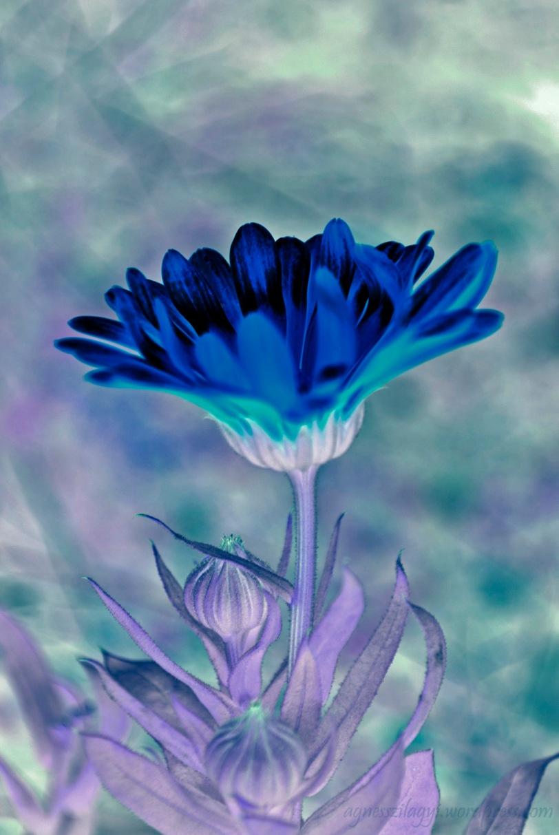DSC_0569_03_invert colour